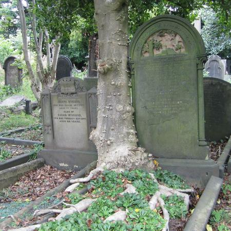 Undercliffe Cemetery: Tree grows through old grave