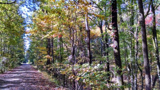 Thacker Mountain Rail Trail