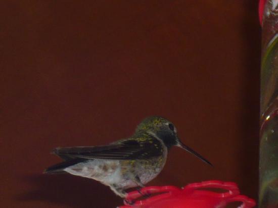 Duck Creek Village Jun '15 - hummingbirds haven