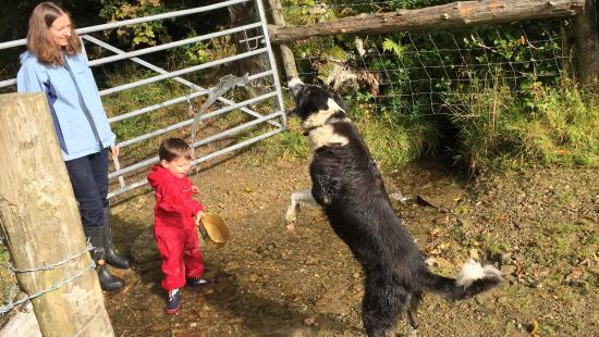 Llanllwni, UK: Playing with farm dog at Cwmiar