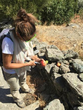 Trekking Andros & Outdoor Activities: Pomegranate break