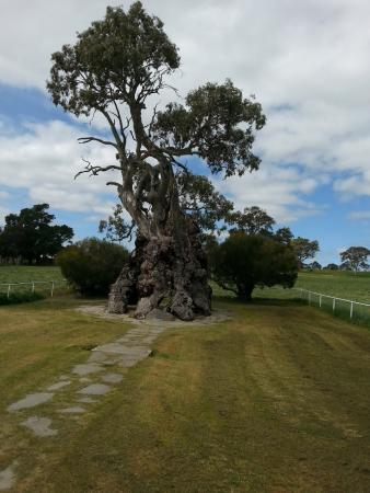 Bums On Seats Day Tours: Herbig Family Tree