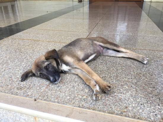 Thiri Myaing Hotel : The only thing worth taking a photo of was this puppy at the front door