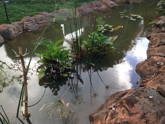 Kilauea, Hawaï: Pond
