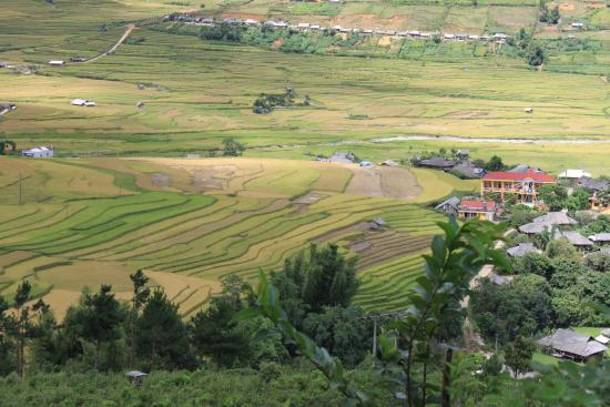 Mu Cang Chai terraced rice fields - Picture of Asia Pacific