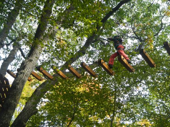 treetop trekking in huntsville ontario picture of. Black Bedroom Furniture Sets. Home Design Ideas