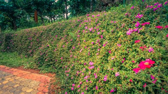 Grass wall with pink flowers picture of the suvistara wayanad the suvistara wayanad grass wall with pink flowers mightylinksfo