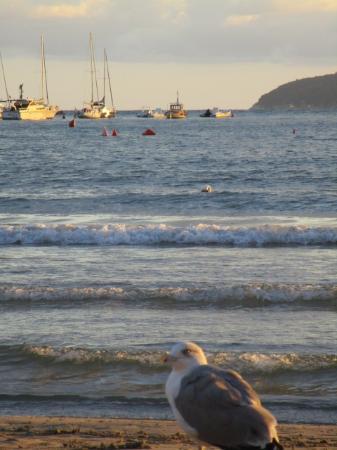 Barche a largo al tramonto con gabbiano foto di lido di for Barche al largo con cabine