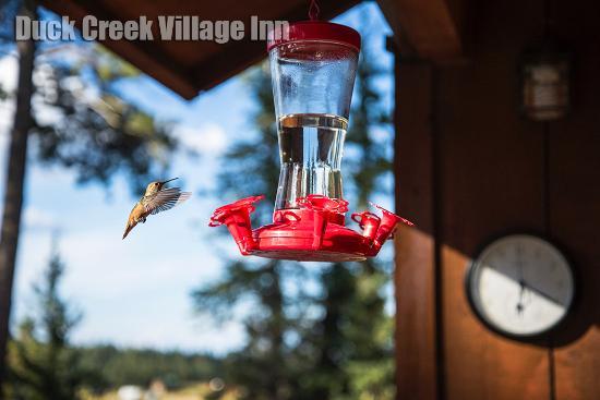 Duck Creek Village, UT: Vue de la chambre