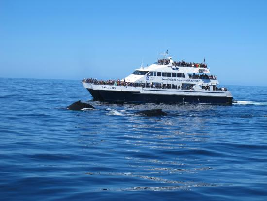Wales With New England Aquarium Whale Watch Boat In The