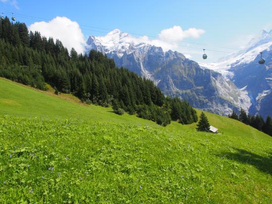 Grindelwald, Switzerland: beautiful view