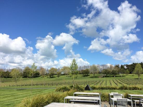 Villa Maria Auckland Winery : photo0.jpg