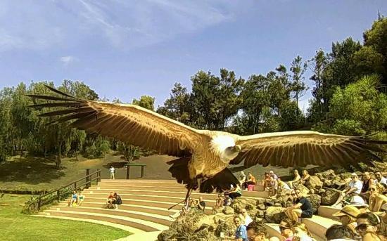 The Birds of prey - Picture of Rancho Texas Lanzarote Park, Puerto Del Carmen...