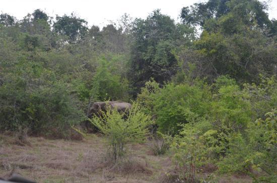 Wasgamuwa National Park: elephants