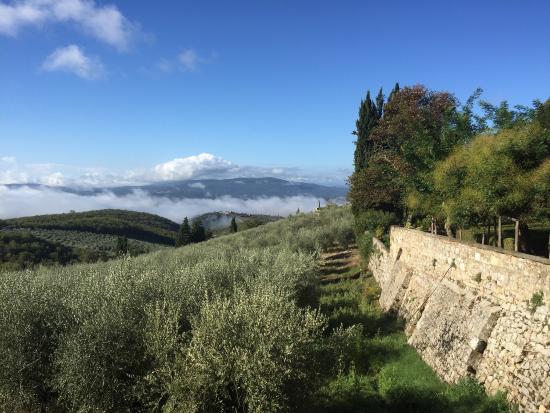 Sara Testi ,Hiking, Walking and Tour Guide in Siena & Tuscany: photo0.jpg