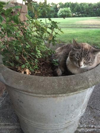 Seven Oaks Bed and Breakfast: Kitty Kat on the Property