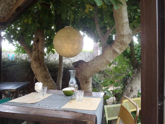 Lunch under the tree picture of le jardin en ville for Le jardin carcassonne