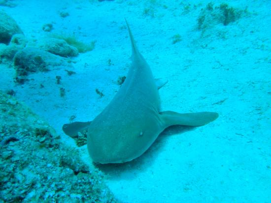 Chinchorro Reef: Nodrisa.