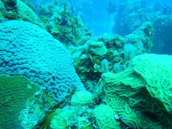 Chinchorro Reef: Chinchorro.
