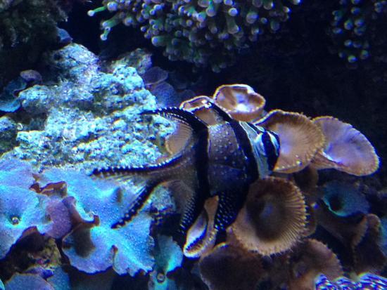 Fish Picture Of Mystic Aquarium Mystic Tripadvisor