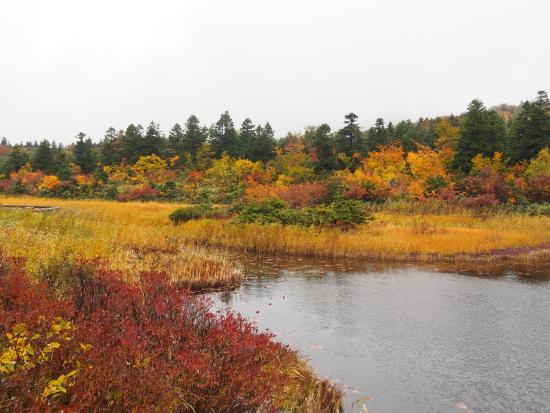 Suiren Pond: 紅葉の睡蓮沼