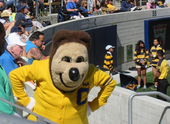 oski university of california berkeley mascot berkeley ca foto