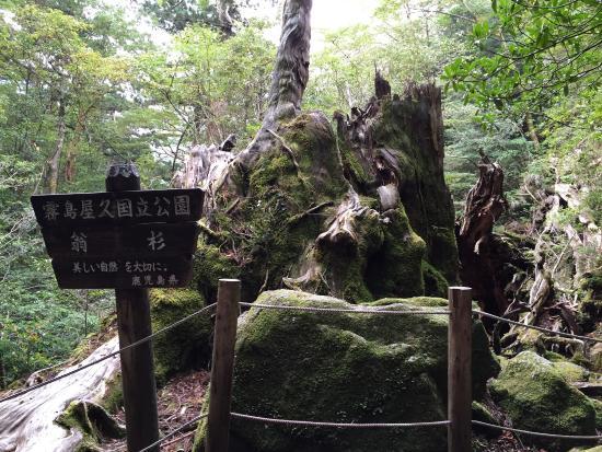 Okinasugi