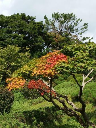 Honma Art Museum Garden : 本間美術館庭園