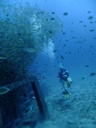 Pirate Divers: Artificial reef