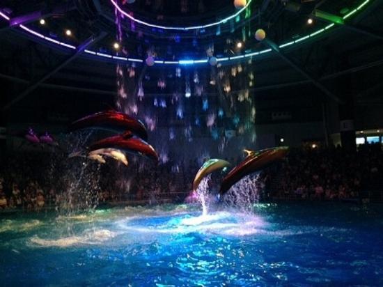 Dolphin show at Shinagawa Aquarium - Picture of Aqua Park Shinagawa, Minato -...