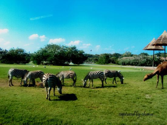 Bo Phloi (Kanchanaburi) Thailand  city photos : ... Open Zoo Bild von Safari Park Open Zoo, Kanchanaburi TripAdvisor