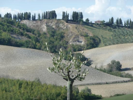 Ghizzano, Italie : Landschaft