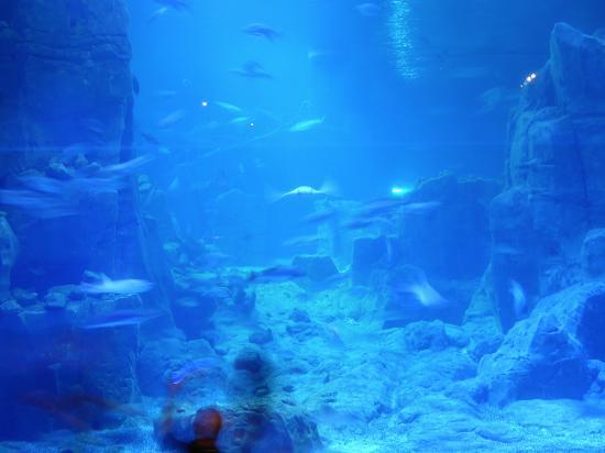 Istanbuler Hafen en Minit?r - Picture of Istanbul Aquarium, Istanbul