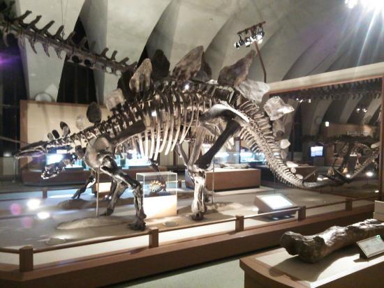Tokai University Marine Science Museum: 東海大学海洋科学博物館
