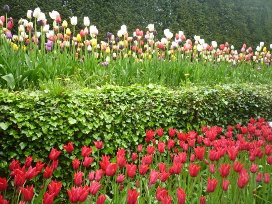 Biddulph, UK: Tupil garden