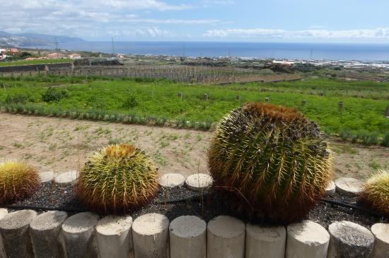MoringaPark Tenerife: Landschaft