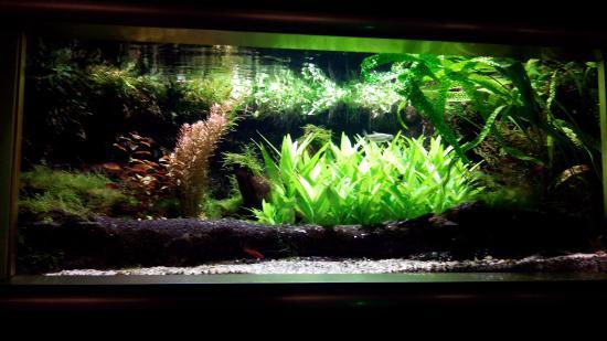 museum aquarium de nancy photo de mus 233 um aquarium de nancy nancy tripadvisor