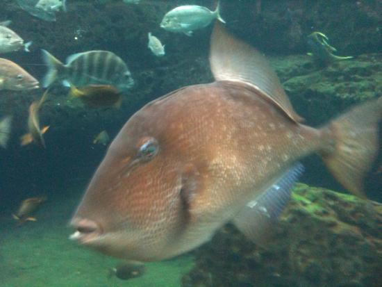 Photogenic fish picture of georgia aquarium atlanta for Georgia freshwater fish