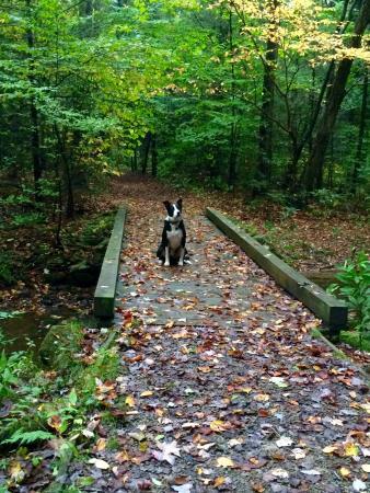 Kooser State park: Oliver enjoying the fall scenery at Kooser!