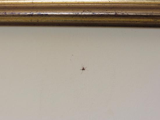 Hotel Souvenir: Um dos mosquitos que tivemos que matar