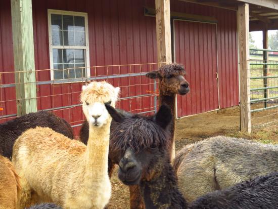 Penelope, Anita and June