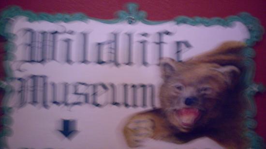 The Den - Jasper's Wildlife Museum: Downstairs