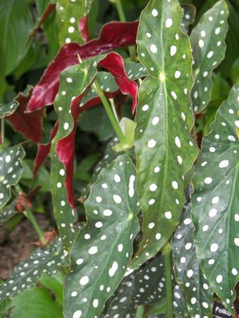Madison, WI: Olbrich Gardens