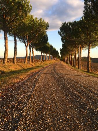 La Manonera: Questo è solo il viale d'ingresso....