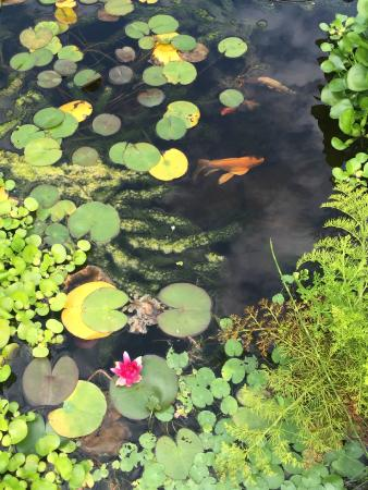 The Whimsical Pig Bed and Breakfast at Wolf Creek: koi pond in the backyard