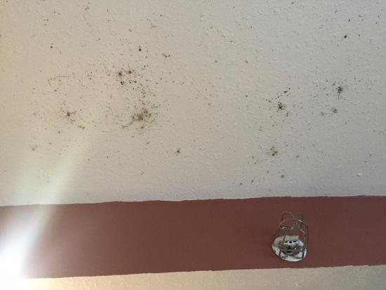 Desoto Beach Hotel: Mold dotting the ceiling of our room.