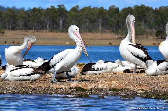 Murgon, Australia: Yallakool Caravan Park - Bjelke Petersen Dam