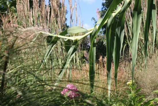 Butterfly Garden Picture Of Springfield Botanical Gardens Springfield Tripadvisor