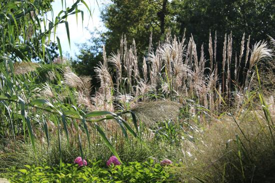 Garden Picture Of Springfield Botanical Gardens Springfield Tripadvisor