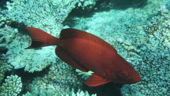 Coral Reef View Inn: Tropical underwater-life